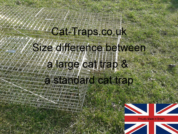 this photo shows how much longer and larger our large cat trap is againt our standard feral cat trap