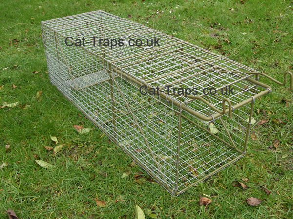 large cat trap