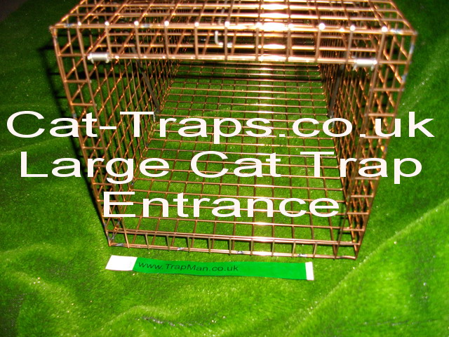new large cat trap entrance